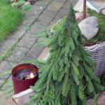 Mit eget træ voksede frem