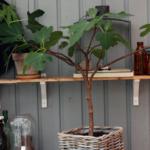 Planter i udestuen