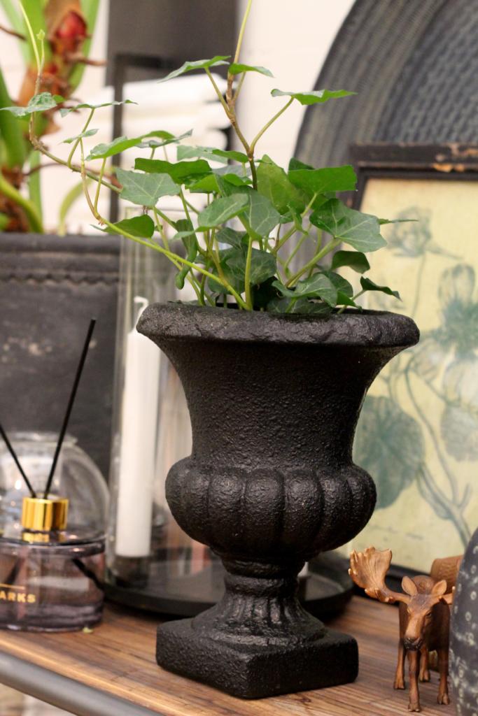 Potteplanterne hjemme hos dig – så vigtige er de!