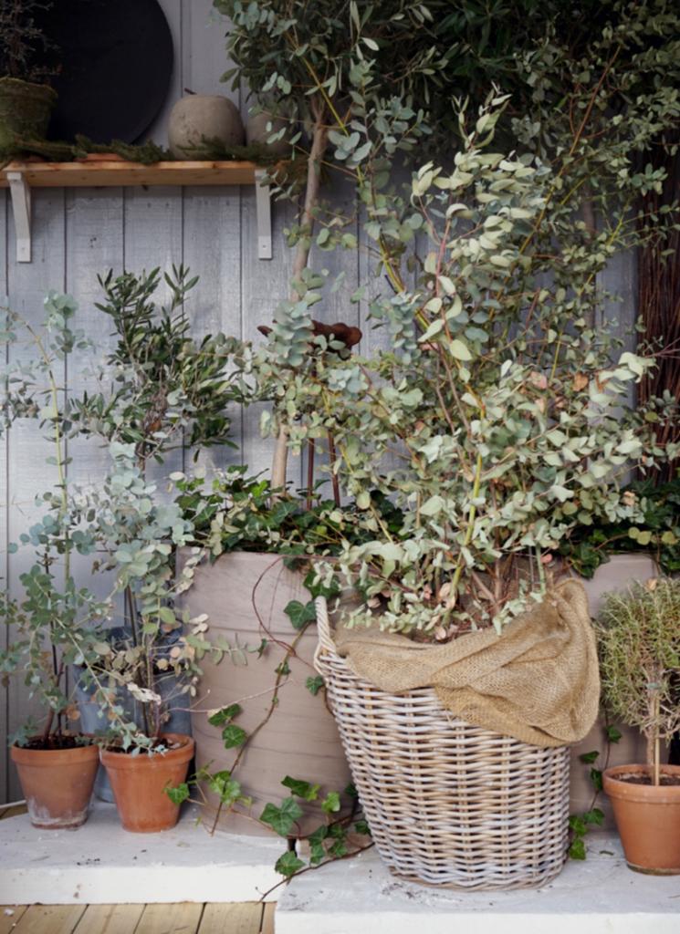 Dine overvintrende planter – hvordan har de det?