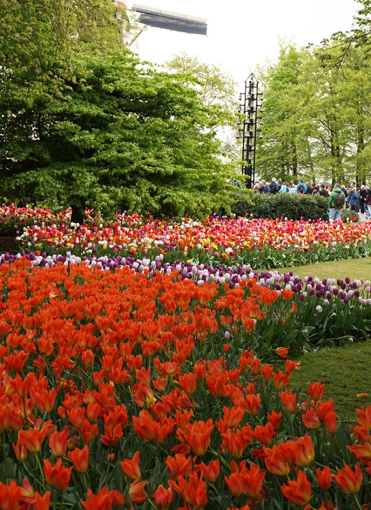 tulipanerne i Amsterdam